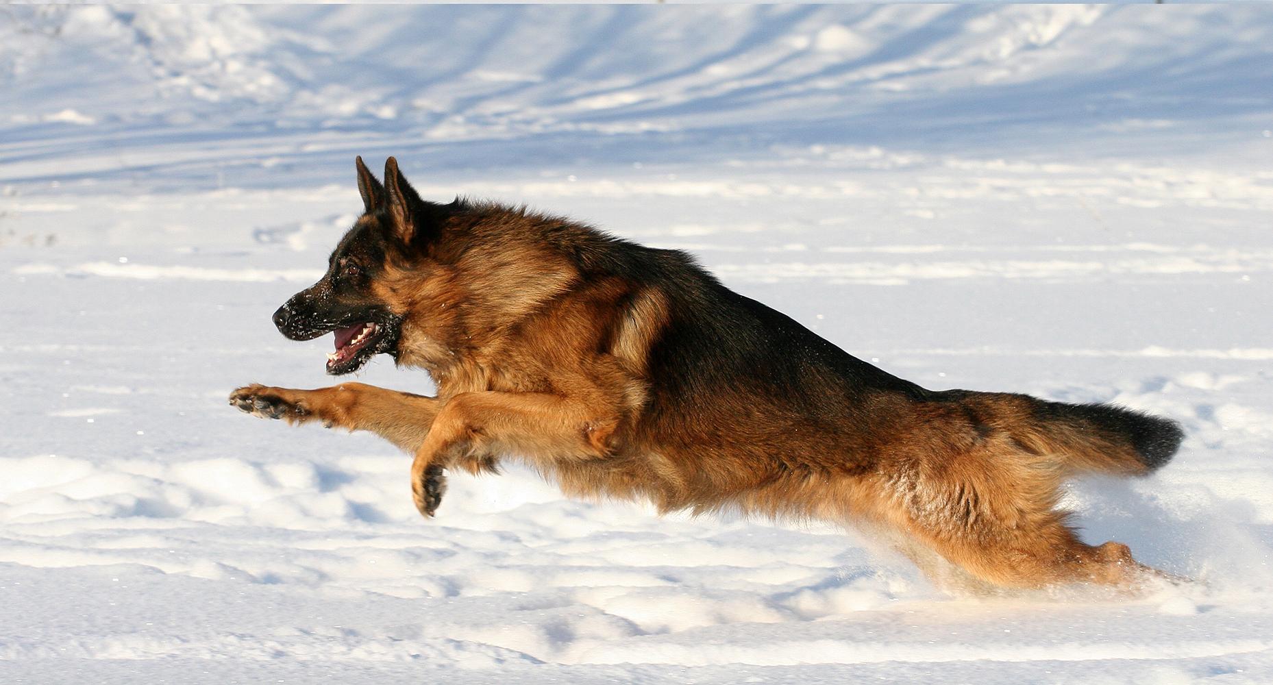 dog-bite-2